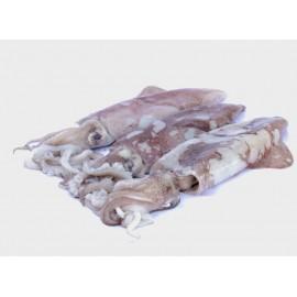 Calamaro fresco