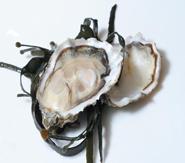 SteMir - Frutti di Mare